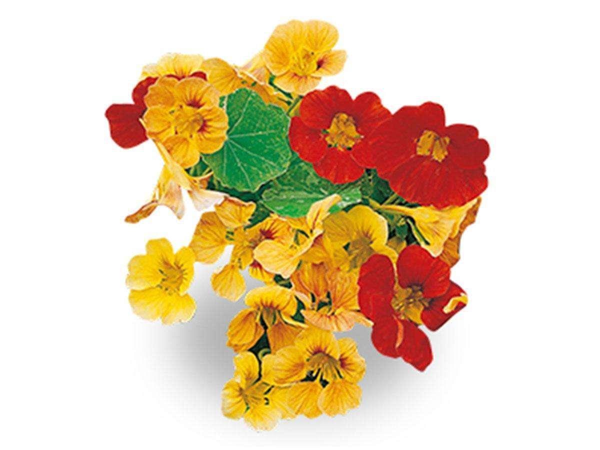 fiori utili