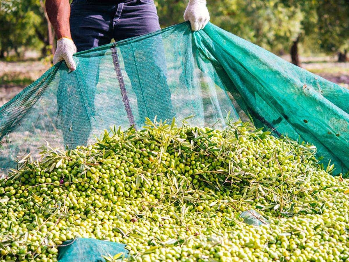 Reti per raccolta olive - dettaglio 2